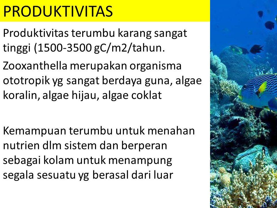 PRODUKTIVITAS Produktivitas terumbu karang sangat tinggi (1500-3500 gC/m2/tahun. Zooxanthella merupakan organisma ototropik yg sangat berdaya guna, al