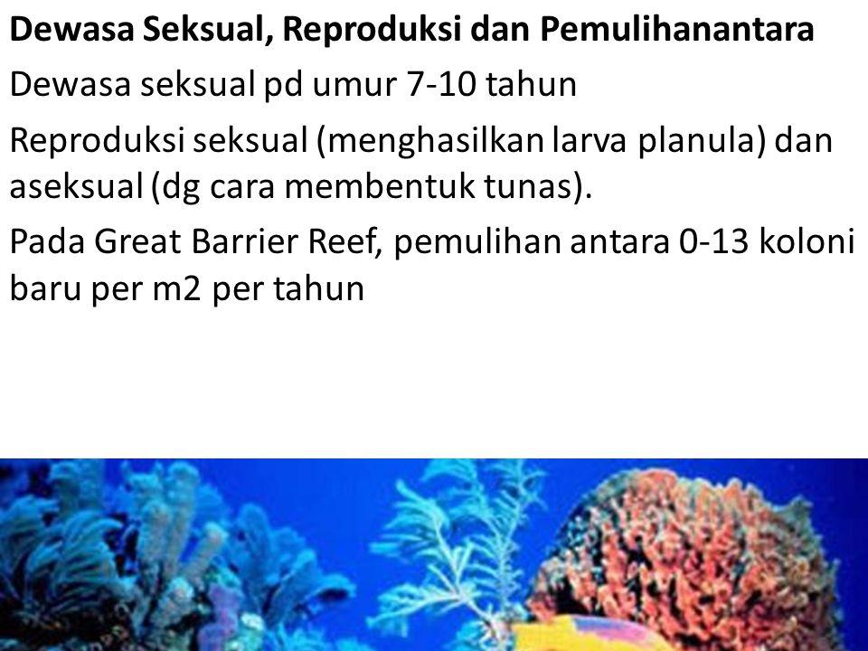 Dewasa Seksual, Reproduksi dan Pemulihanantara Dewasa seksual pd umur 7-10 tahun Reproduksi seksual (menghasilkan larva planula) dan aseksual (dg cara