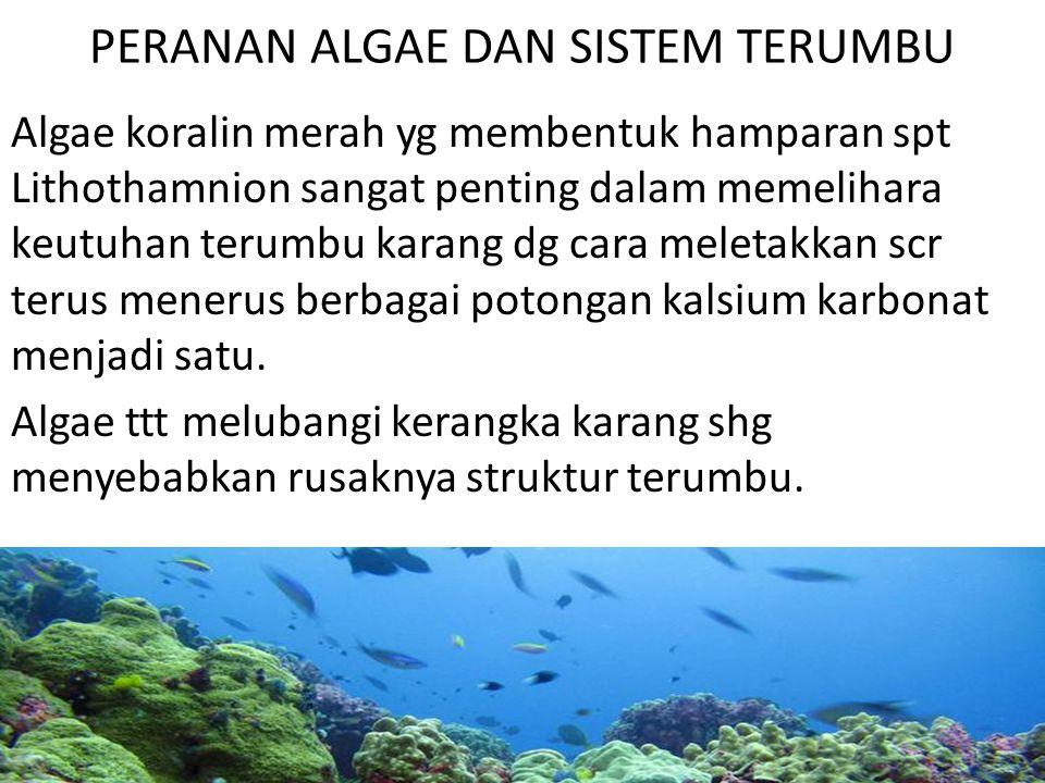 PERANAN ALGAE DAN SISTEM TERUMBU Algae koralin merah yg membentuk hamparan spt Lithothamnion sangat penting dalam memelihara keutuhan terumbu karang d