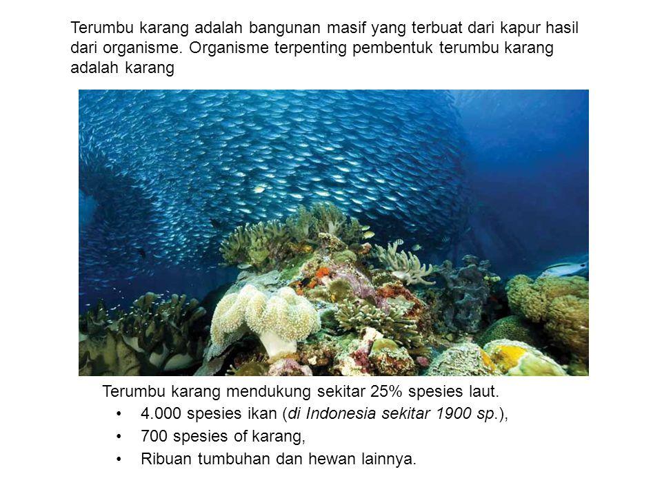 Terumbu karang mendukung sekitar 25% spesies laut. 4.000 spesies ikan (di Indonesia sekitar 1900 sp.), 700 spesies of karang, Ribuan tumbuhan dan hewa