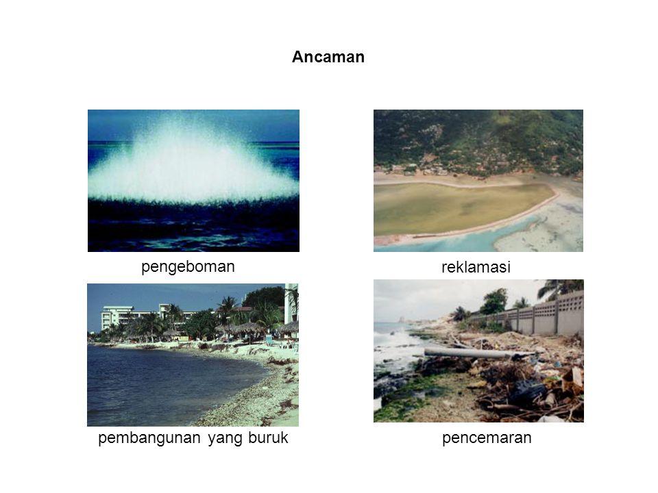 Ancaman reklamasi pengeboman pembangunan yang buruk pencemaran