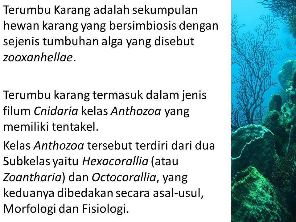 Terumbu Karang adalah sekumpulan hewan karang yang bersimbiosis dengan sejenis tumbuhan alga yang disebut zooxanhellae. Terumbu karang termasuk dalam