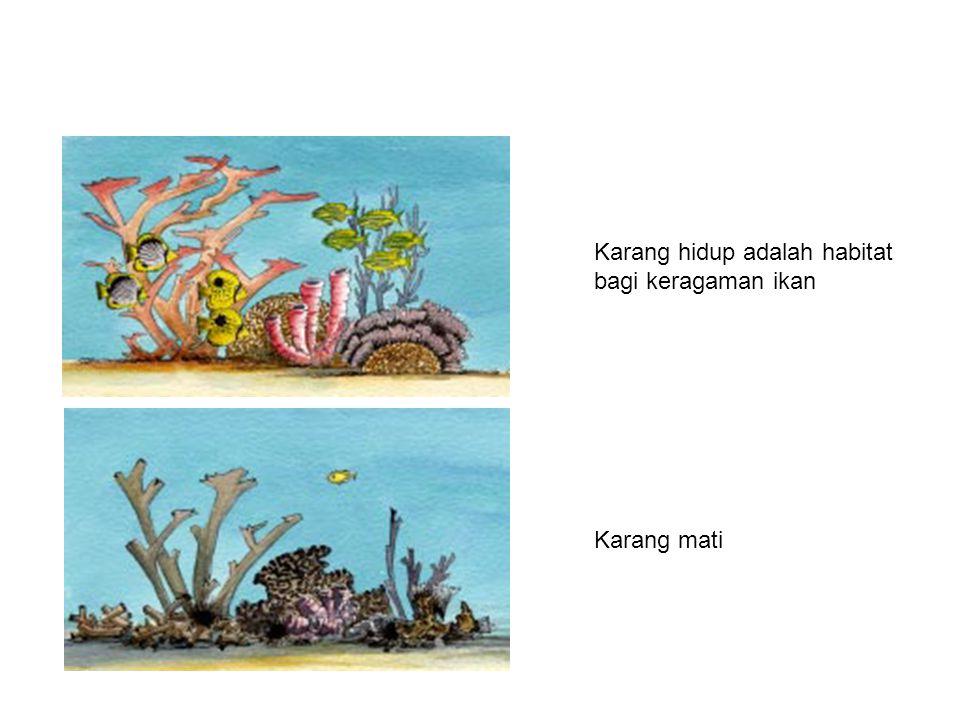 Karang hidup adalah habitat bagi keragaman ikan Karang mati