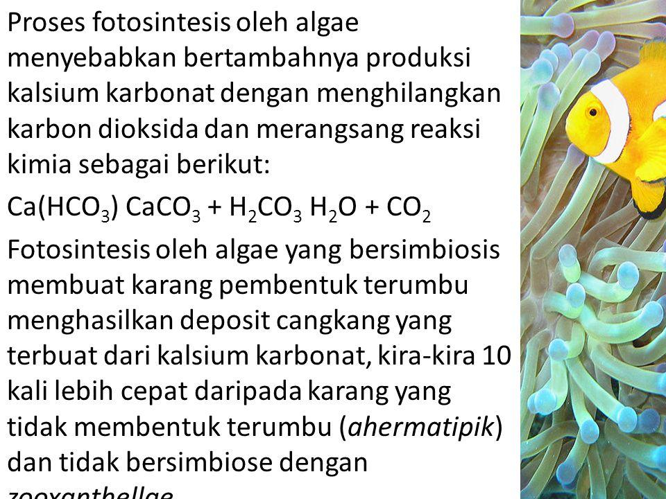 Proses fotosintesis oleh algae menyebabkan bertambahnya produksi kalsium karbonat dengan menghilangkan karbon dioksida dan merangsang reaksi kimia seb