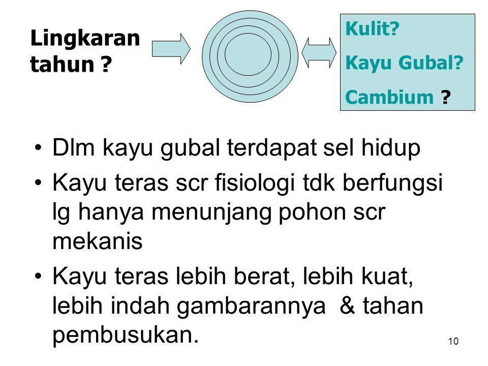 10 Dlm kayu gubal terdapat sel hidup Kayu teras scr fisiologi tdk berfungsi lg hanya menunjang pohon scr mekanis Kayu teras lebih berat, lebih kuat, l