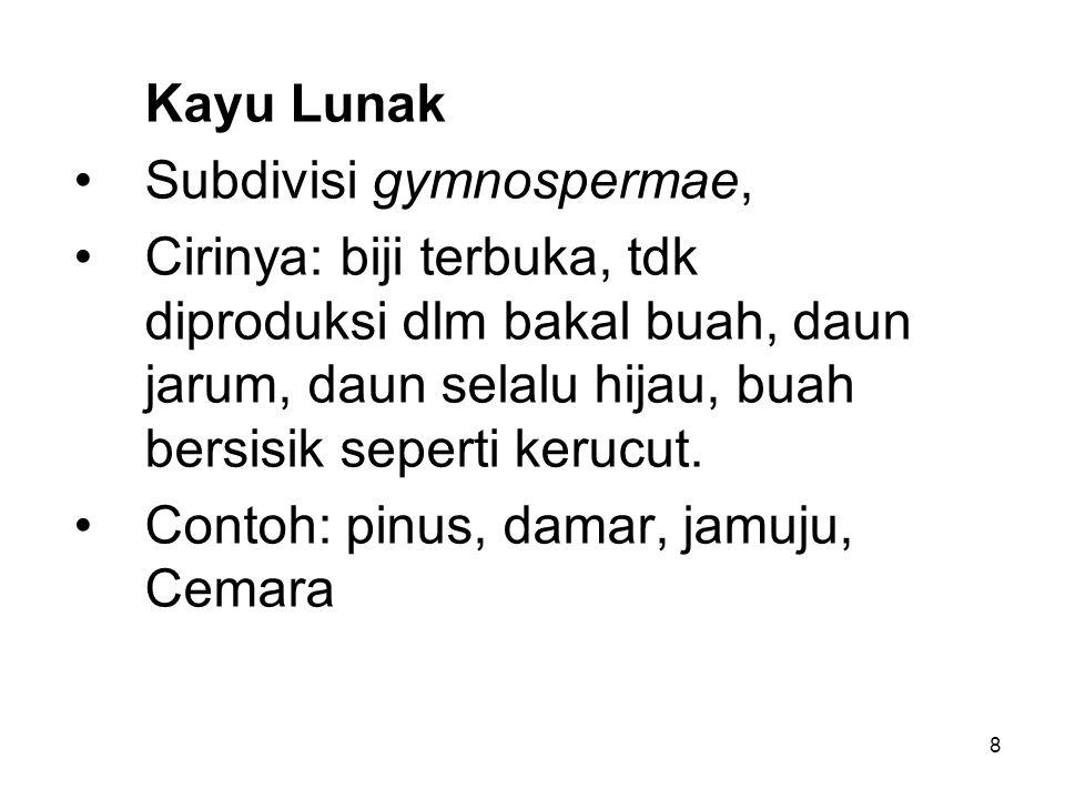 8 Kayu Lunak Subdivisi gymnospermae, Cirinya: biji terbuka, tdk diproduksi dlm bakal buah, daun jarum, daun selalu hijau, buah bersisik seperti kerucu