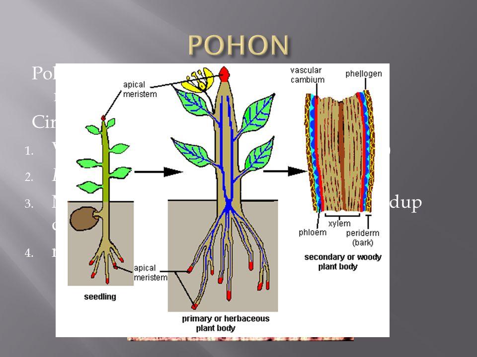 Pohon adalah tumbuh-tumbuhan yang menghasilkan kayu Ciri-ciri : 1. Vaskuler (memiliki jaringan pengangkut) 2. Perennial (hidup dalam beberapa tahun) 3