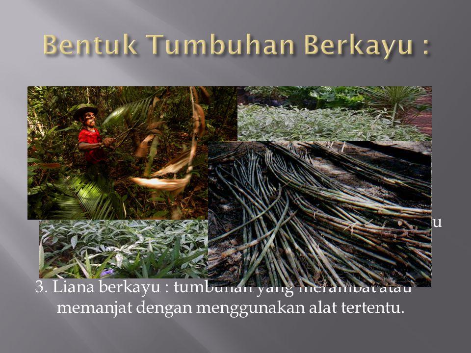 1. Pohon : tumbuhan berkayu yang dapat mencapai tinggi paling sedikit tujuh (7) meter pada suatu tempat tumbuh tertentu dan biasanya hanya mempunyai s