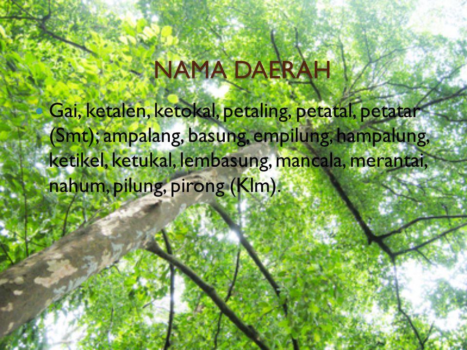DAERAH HABITAT DAN PENYEBARANNYA Sumatera Utara, Sumatera Barat, Riau, Sumatera, Selatan dan seluruh Kalimantan.