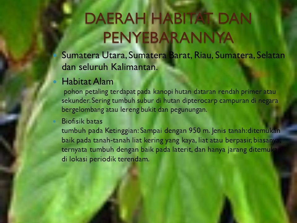 DAERAH HABITAT DAN PENYEBARANNYA Sumatera Utara, Sumatera Barat, Riau, Sumatera, Selatan dan seluruh Kalimantan. Habitat Alam pohon petaling terdapat