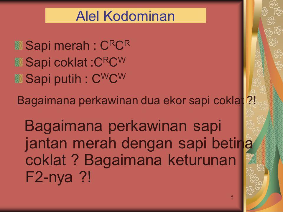 5 Alel Kodominan Sapi merah : C R C R Sapi coklat :C R C W Sapi putih : C W C W Bagaimana perkawinan dua ekor sapi coklat ?! Bagaimana perkawinan sapi