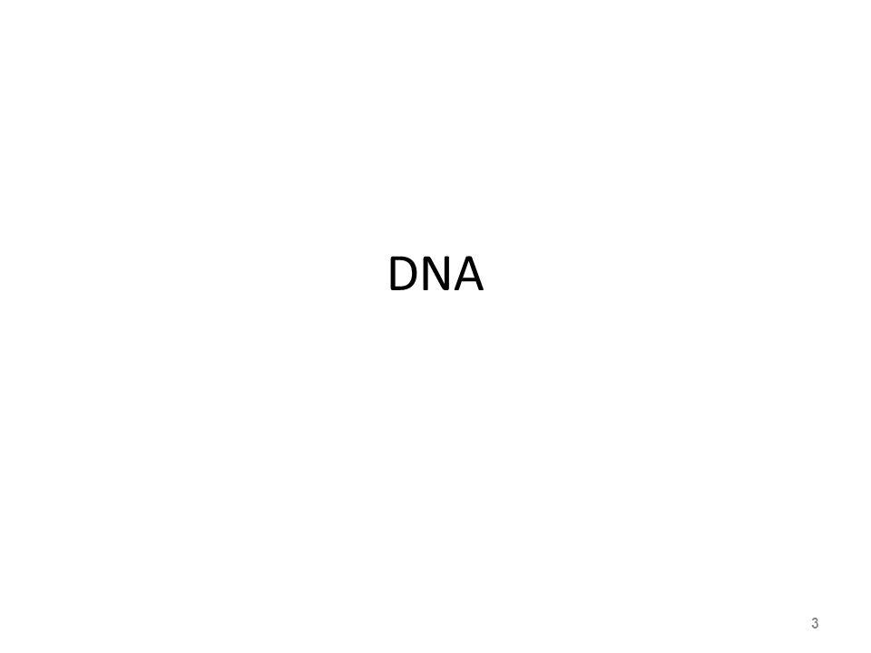 PROTEIN 24 Satu Asam amino Protein adalah makromolekul yang mempunyai banyak peranan dan fungsi dalam sel, seperti: membangun sel, menyimpan, transport, pertahanan diri dan enzim katalisis.