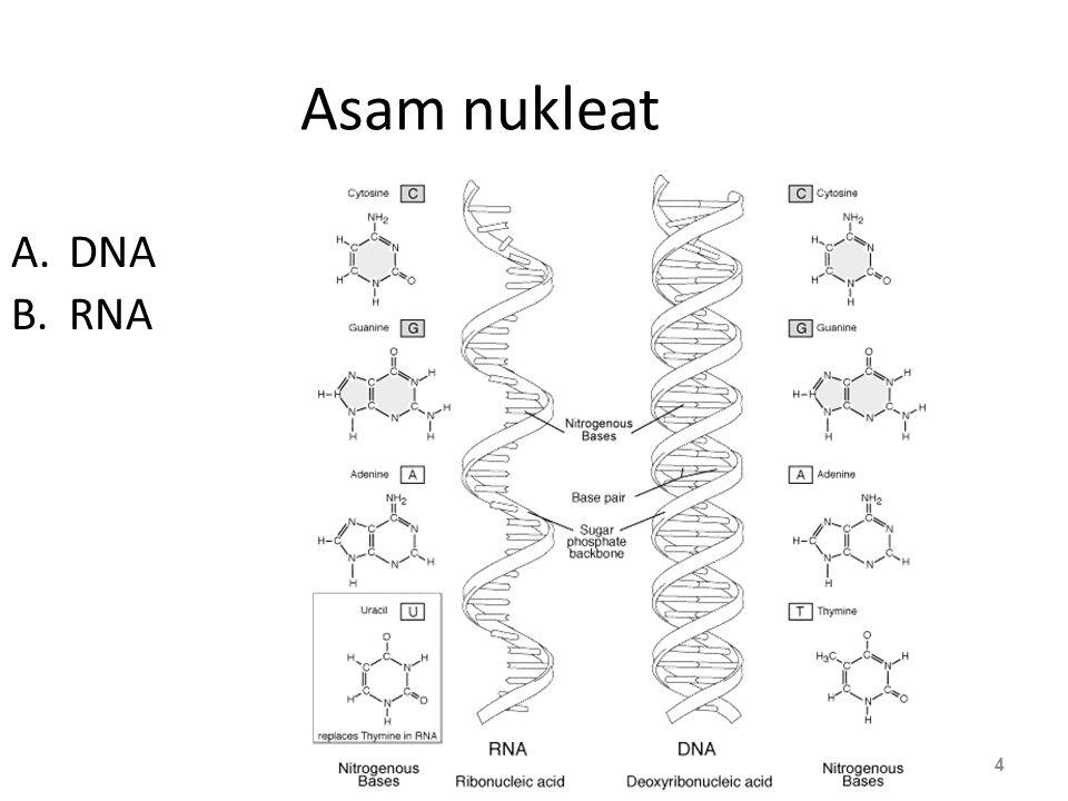 Asam amino 25 Glisin : non polar Sistein : polar Asam aspartat : asam Terdapat 20 jenis asam amino.