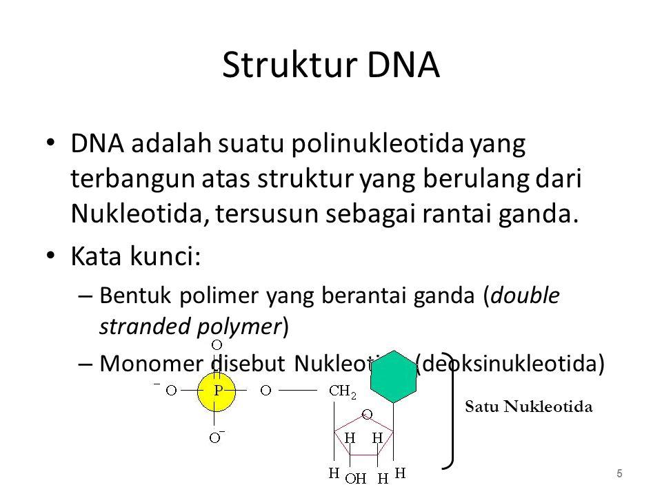 Struktur DNA DNA adalah suatu polinukleotida yang terbangun atas struktur yang berulang dari Nukleotida, tersusun sebagai rantai ganda. Kata kunci: –