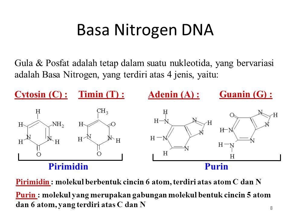 RNA 19