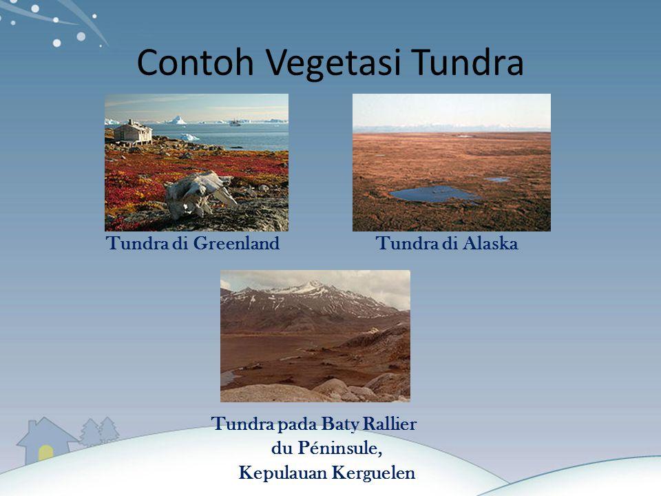 Contoh Vegetasi Tundra Tundra di GreenlandTundra di Alaska Tundra pada Baty Rallier du Péninsule, Kepulauan Kerguelen