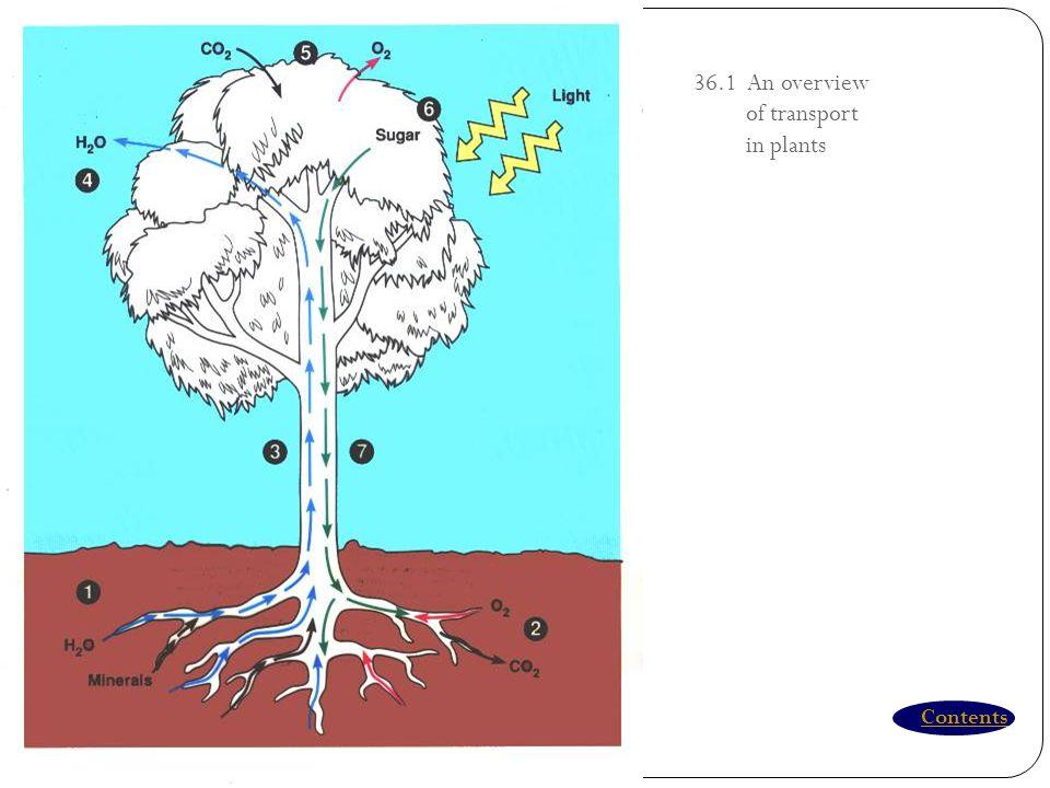 Transport & Nutrisi Pada Tumbuhan Menggunakan jaringan Xilem & floem Fungsi  fotosintesis dan resorbsi mineral Nutrisi  mikronutrien & makronutrien
