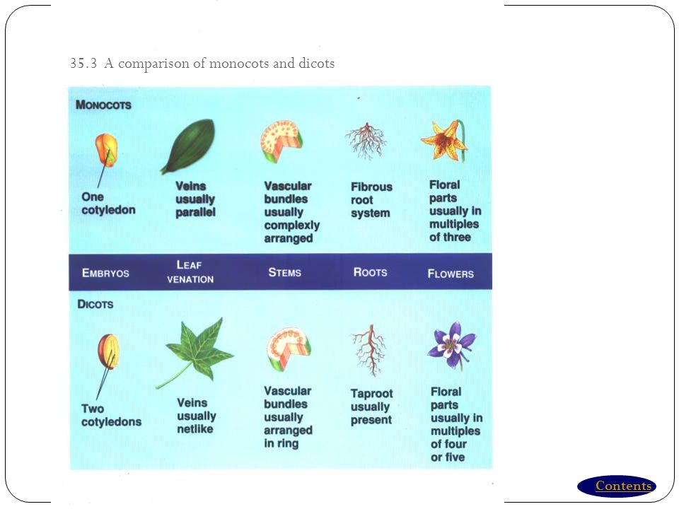 Contents 35.3 A comparison of monocots and dicots