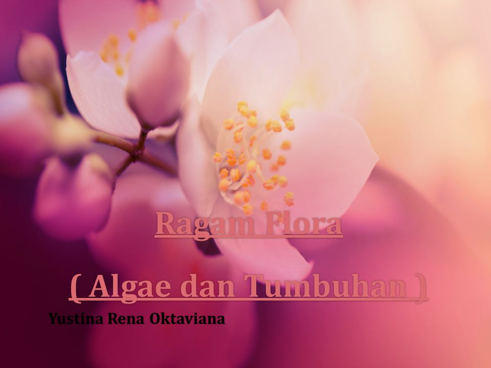 Ragam Flora ( Algae dan Tumbuhan ) Ragam Flora ( Algae dan Tumbuhan ) Yustina Rena OktavianaYustina Rena Oktaviana