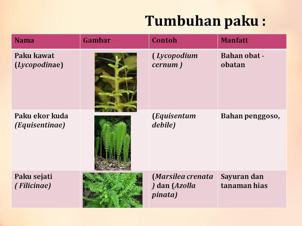 Tumbuhan paku : NamaGambarContohManfatt Paku kawat (Lycopodinae) ( Lycopodium cernum ) Bahan obat - obatan Paku ekor kuda (Equisentinae) (Equisentum d