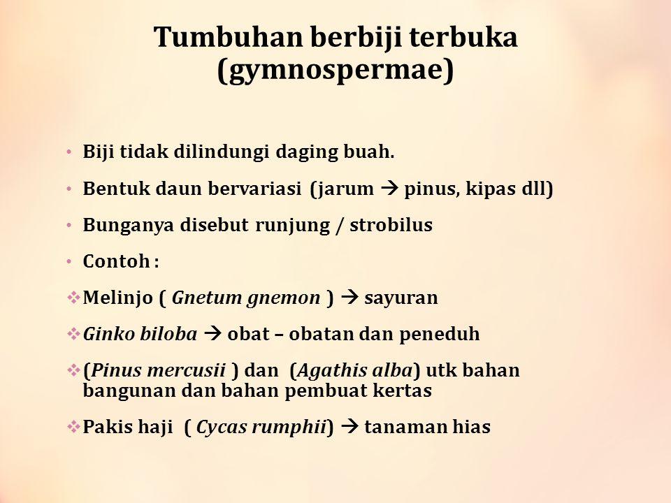 Tumbuhan berbiji terbuka (gymnospermae) Biji tidak dilindungi daging buah. Bentuk daun bervariasi (jarum  pinus, kipas dll) Bunganya disebut runjung