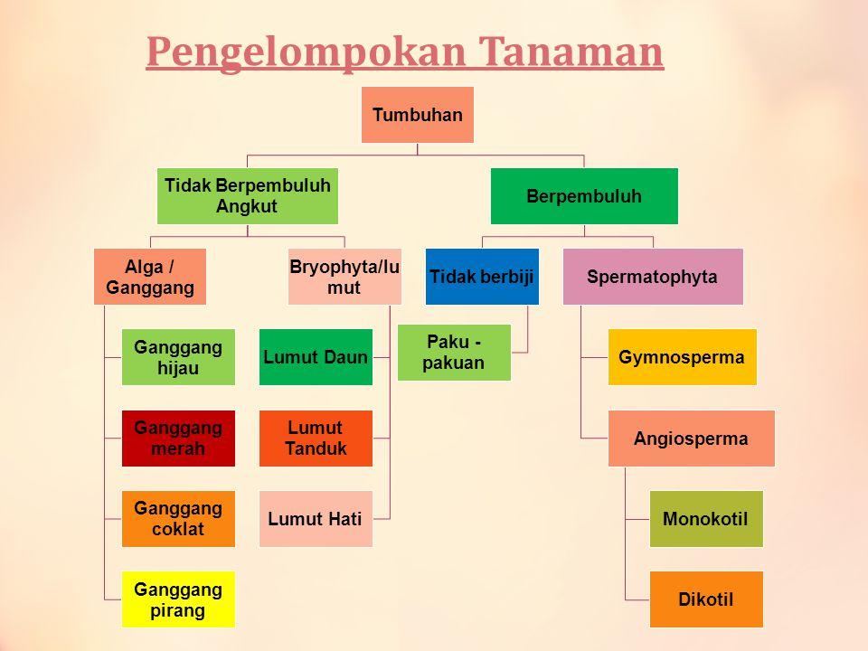 ALGAE dibagi mjd 4 menurut warna pigmennya : AlgaeNama pigmen tambahan 1.Hijau 2.Merah 3.Coklat 4.Pirang Karoten Fikoeritrin Fikoxantin Xantofil & karoten