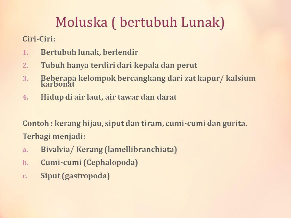 Moluska ( bertubuh Lunak) Ciri-Ciri: 1. Bertubuh lunak, berlendir 2. Tubuh hanya terdiri dari kepala dan perut 3. Beberapa kelompok bercangkang dari z