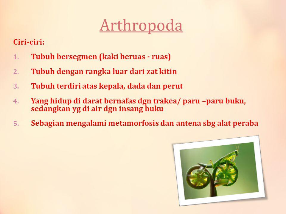 Arthropoda Ciri-ciri: 1. Tubuh bersegmen (kaki beruas - ruas) 2. Tubuh dengan rangka luar dari zat kitin 3. Tubuh terdiri atas kepala, dada dan perut