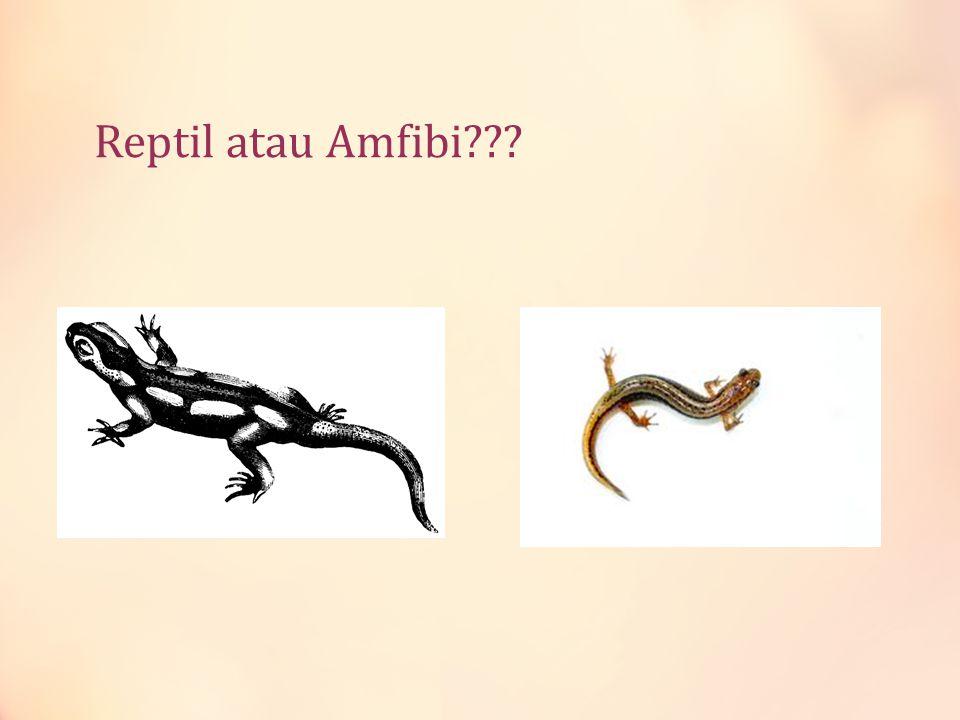 Reptil atau Amfibi???