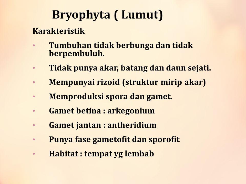 Lumut ( Bryophyta) GambarHabitatContoh Lumut tanduk (Anthocerophyta ) Tempat lembab / menempel di pohon Anthoceros laevis Lumut Hati (Hepaticae) Di darat / pohon berbentuk lembaran spt hati Marchantia polymorpha dan Pellia Lumut daun (Musci) Memiliki tubuh menyerupai batang dan daun Spagnum dan Polytrichum