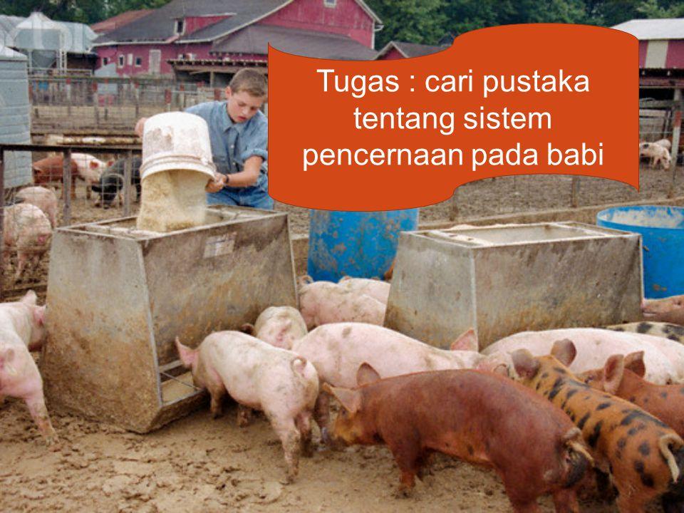 Tugas : cari pustaka tentang sistem pencernaan pada babi