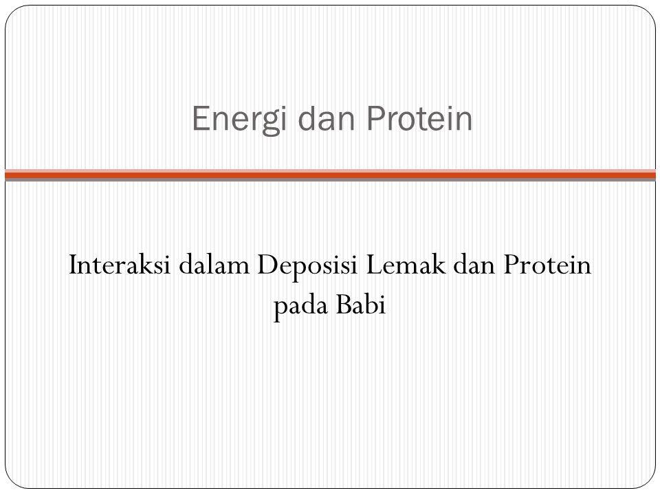 Energi dan Protein Interaksi dalam Deposisi Lemak dan Protein pada Babi