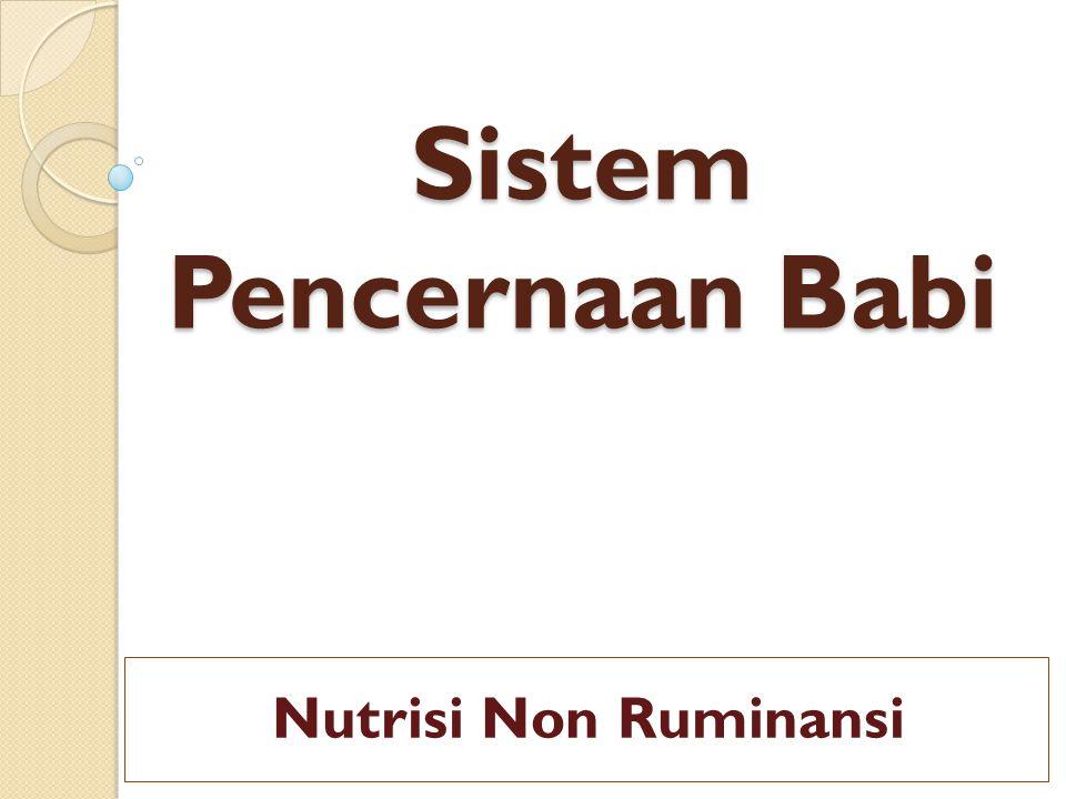 Sistem Pencernaan Babi Nutrisi Non Ruminansi