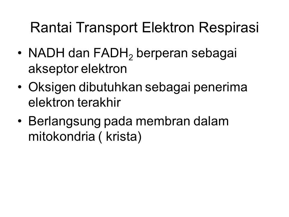 Rantai Transport Elektron Respirasi NADH dan FADH 2 berperan sebagai akseptor elektron Oksigen dibutuhkan sebagai penerima elektron terakhir Berlangsu
