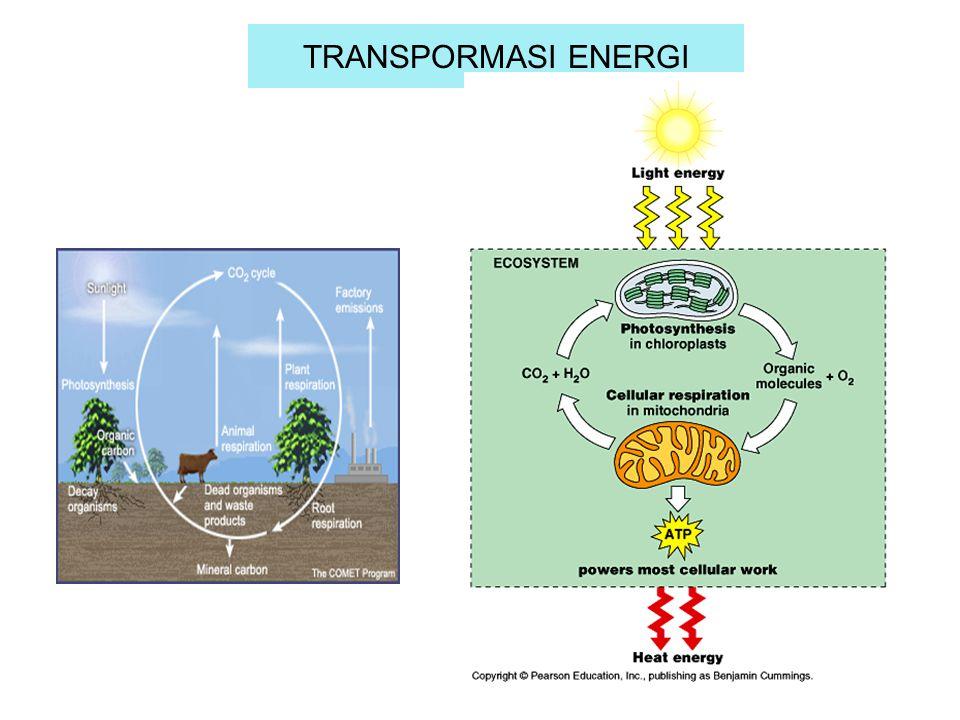TRANSPORMASI ENERGI