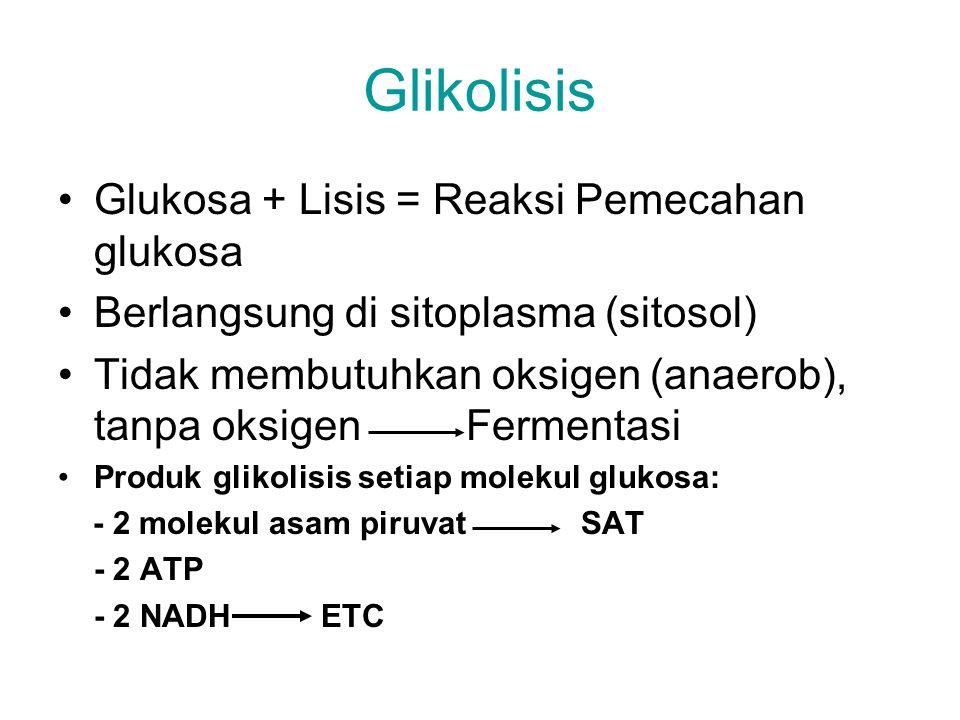 Glikolisis Glukosa + Lisis = Reaksi Pemecahan glukosa Berlangsung di sitoplasma (sitosol) Tidak membutuhkan oksigen (anaerob), tanpa oksigen Fermentas