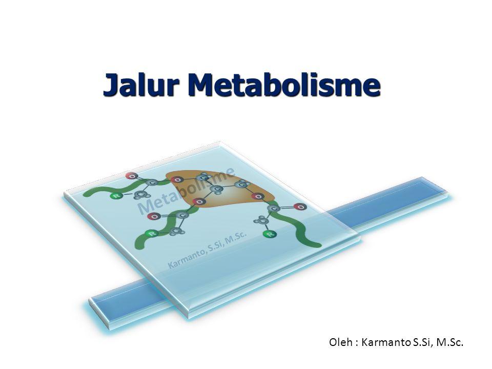Jalur Metabolisme  Katabolisme nukleotida hasil degradasi asam nukleat dimulai dengan konversi ribosa menjadi monosakarida lain yang nantinya mengikuti alur glikolisis.