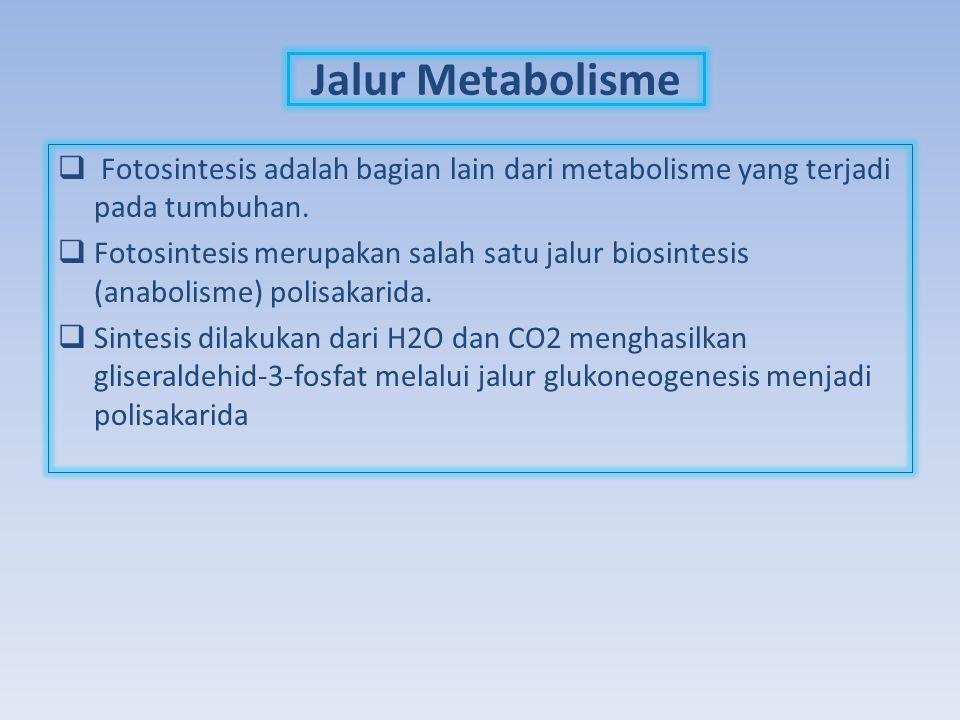 Jalur Metabolisme  Fotosintesis adalah bagian lain dari metabolisme yang terjadi pada tumbuhan.  Fotosintesis merupakan salah satu jalur biosintesis