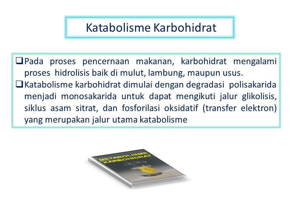 Katabolisme Karbohidrat  Pada proses pencernaan makanan, karbohidrat mengalami proses hidrolisis baik di mulut, lambung, maupun usus.  Katabolisme k