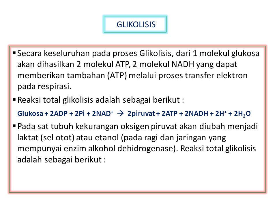 GLIKOLISIS  Secara keseluruhan pada proses Glikolisis, dari 1 molekul glukosa akan dihasilkan 2 molekul ATP, 2 molekul NADH yang dapat memberikan tam