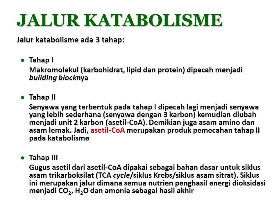 JALUR KATABOLISME Jalur katabolisme ada 3 tahap: ● Tahap I Makromolekul (karbohidrat, lipid dan protein) dipecah menjadi building blocknya ● Tahap II