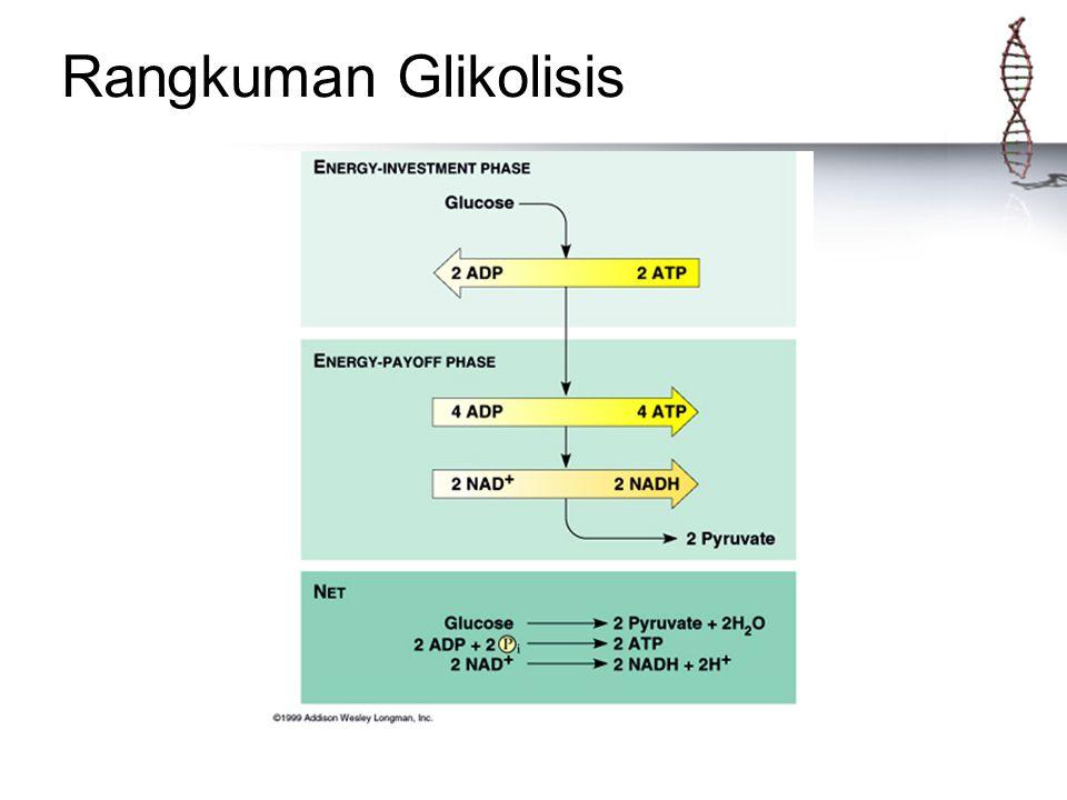 Rangkuman Glikolisis