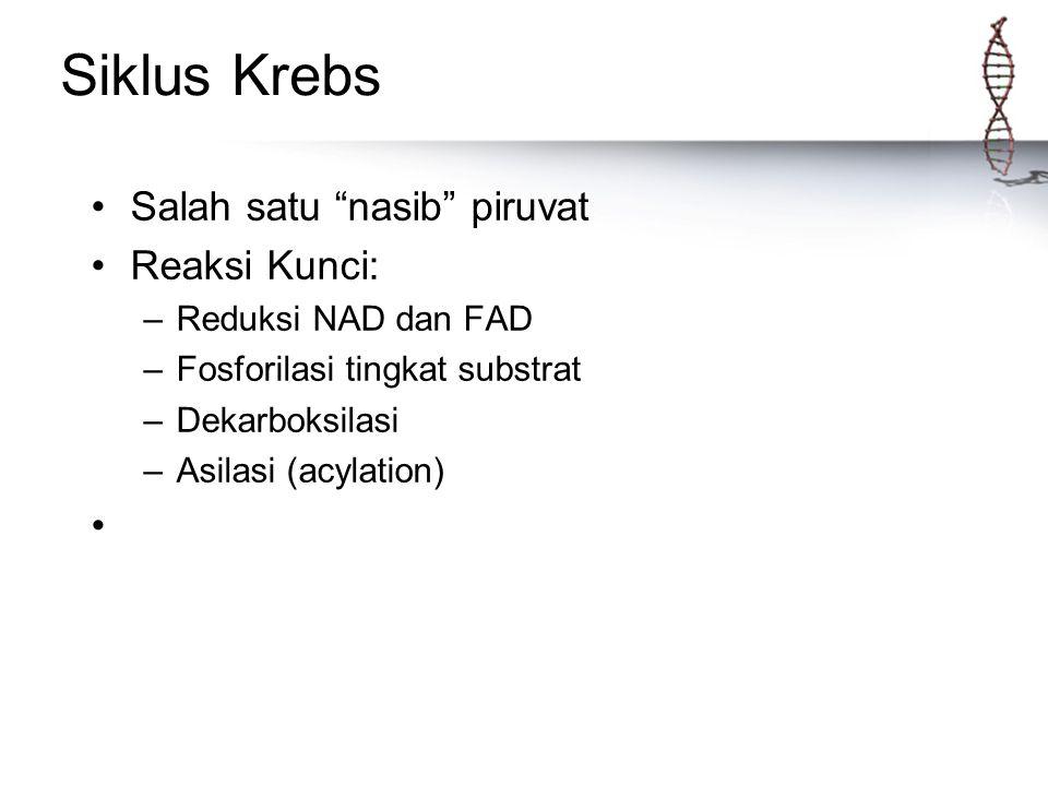 """Siklus Krebs Salah satu """"nasib"""" piruvat Reaksi Kunci: –Reduksi NAD dan FAD –Fosforilasi tingkat substrat –Dekarboksilasi –Asilasi (acylation)"""