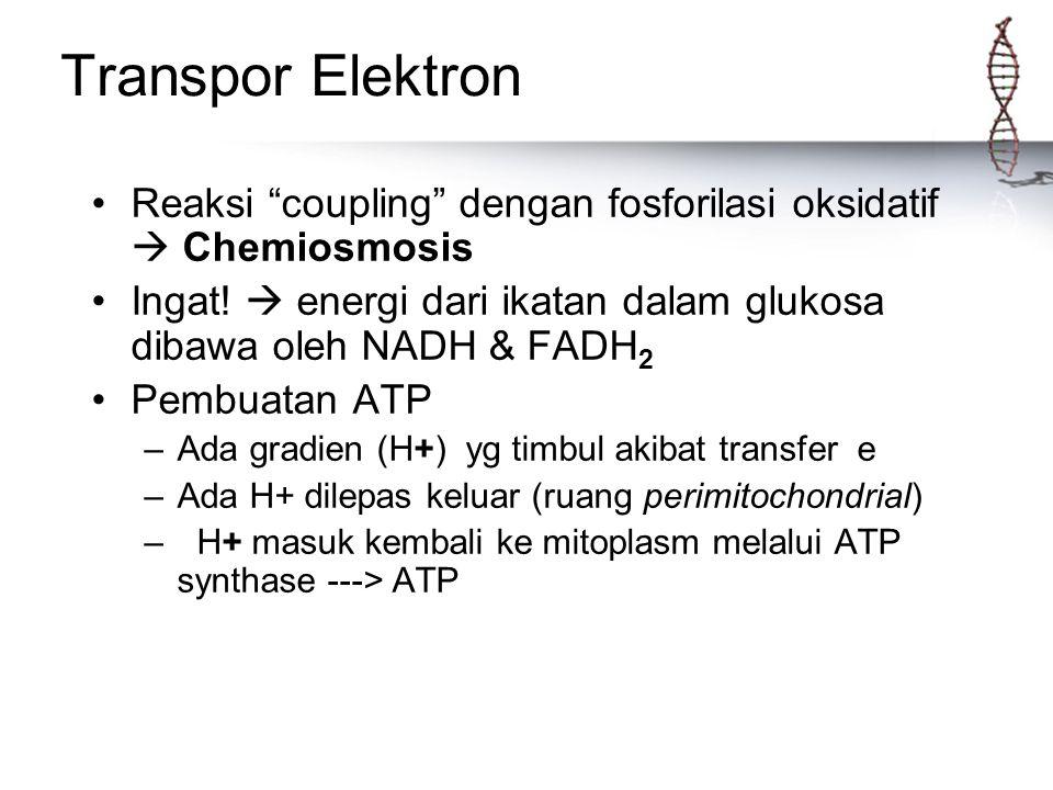 "Transpor Elektron Reaksi ""coupling"" dengan fosforilasi oksidatif  Chemiosmosis Ingat!  energi dari ikatan dalam glukosa dibawa oleh NADH & FADH 2 Pe"