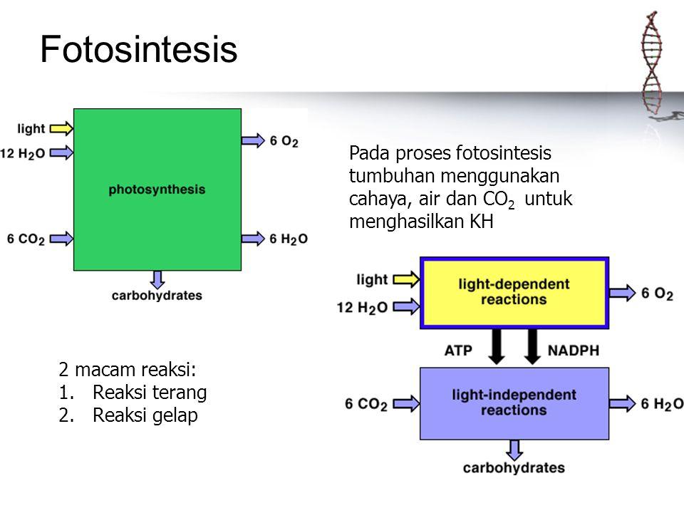 Pada proses fotosintesis tumbuhan menggunakan cahaya, air dan CO 2 untuk menghasilkan KH 2 macam reaksi: 1.Reaksi terang 2.Reaksi gelap Fotosintesis