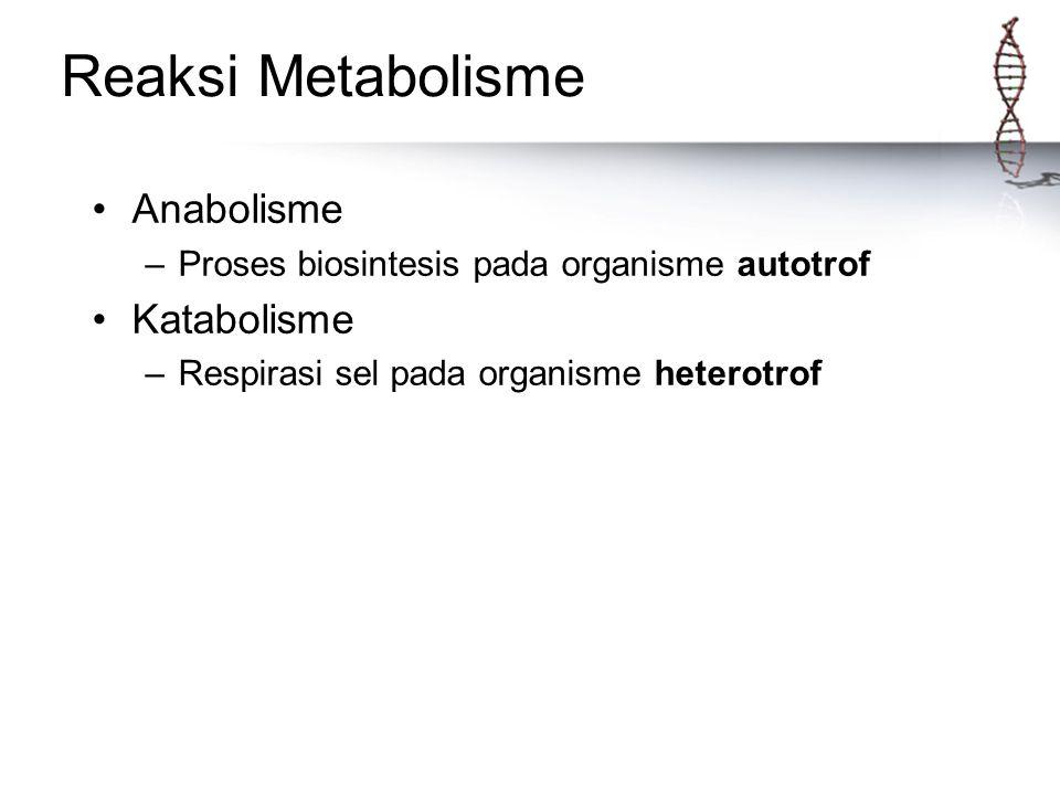 Reaksi Metabolisme Anabolisme –Proses biosintesis pada organisme autotrof Katabolisme –Respirasi sel pada organisme heterotrof
