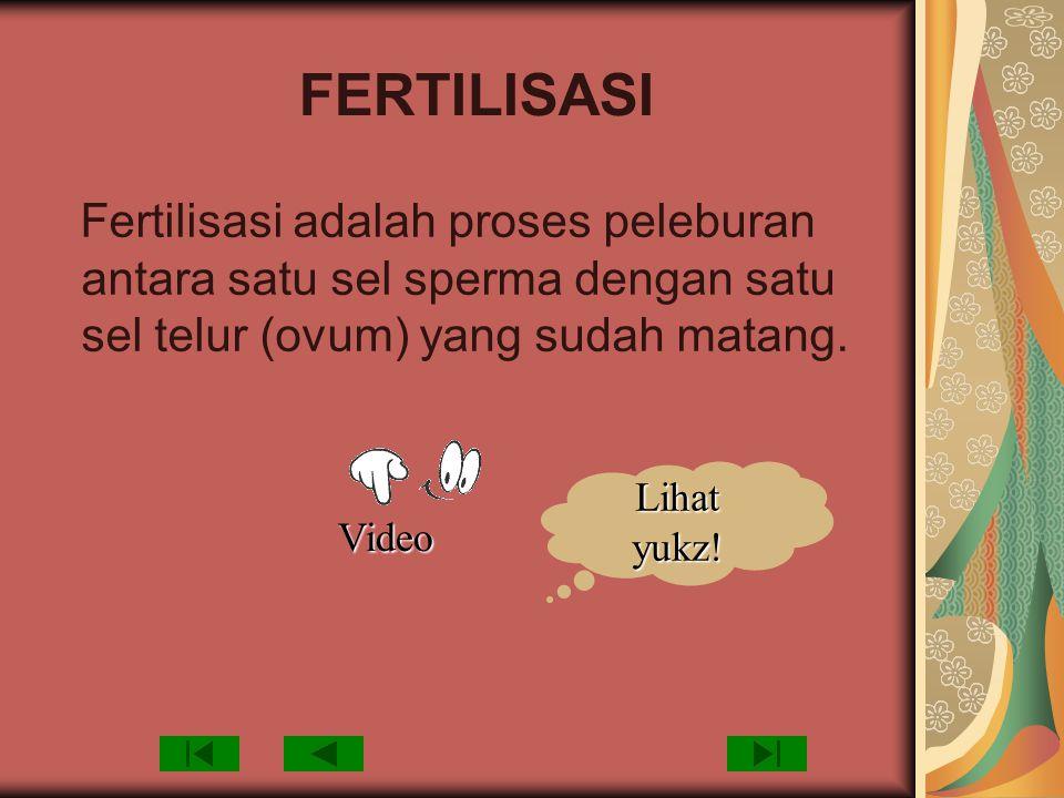 FERTILISASI Fertilisasi adalah proses peleburan antara satu sel sperma dengan satu sel telur (ovum) yang sudah matang. Video Lihat yukz!
