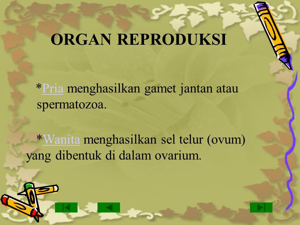 ORGAN REPRODUKSI *Pria menghasilkan gamet jantan atau spermatozoa. *Wanita menghasilkan sel telur (ovum) yang dibentuk di dalam ovarium.