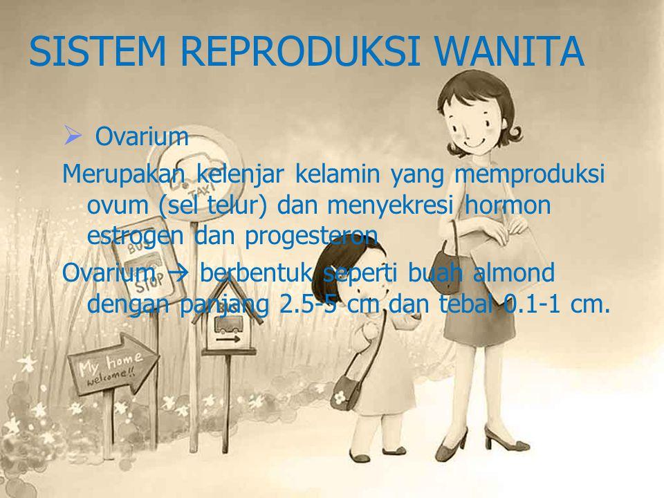 SISTEM REPRODUKSI WANITA  Ovarium Merupakan kelenjar kelamin yang memproduksi ovum (sel telur) dan menyekresi hormon estrogen dan progesteron Ovarium