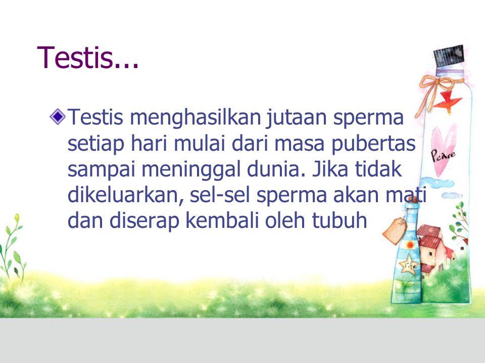 Testis... Testis menghasilkan jutaan sperma setiap hari mulai dari masa pubertas sampai meninggal dunia. Jika tidak dikeluarkan, sel-sel sperma akan m